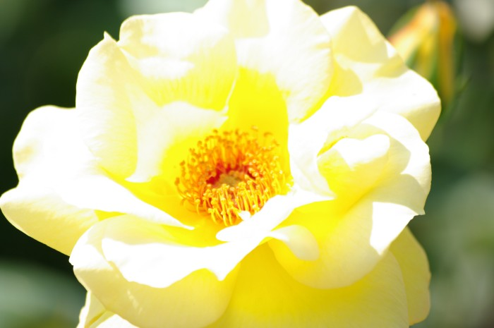 Kwiat1